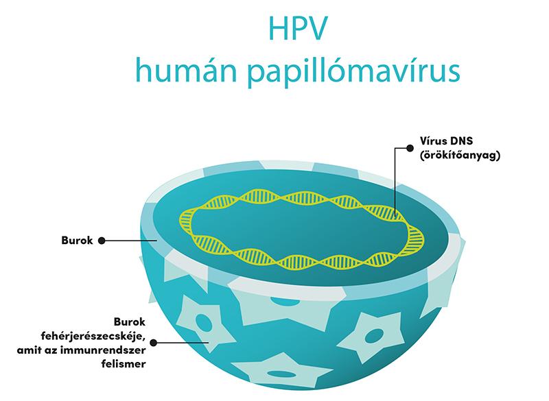 papillomavírus élet pár Szemölcsök vannak, a férjemnek nincsenek